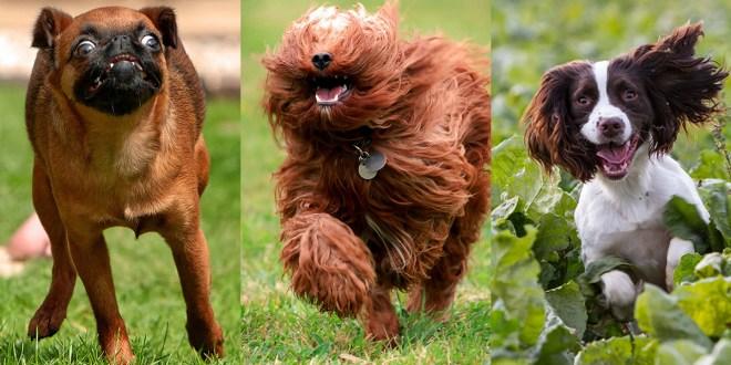 Ces chiens sont photographiés en pleine course, et c'est hilarant!