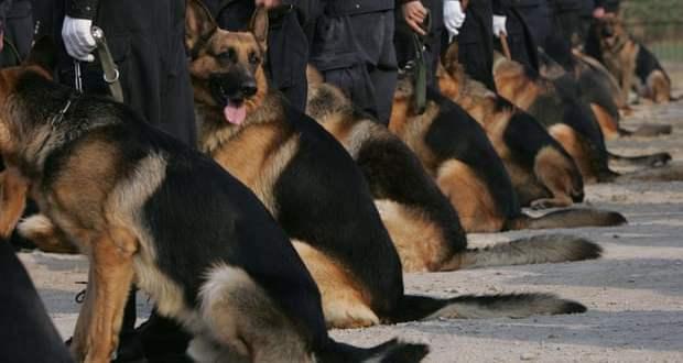 chiens de police