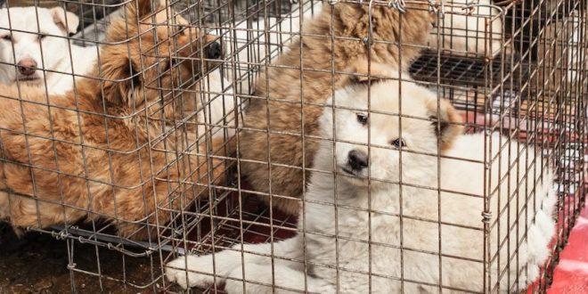 La Chine retire chats et chiens de la liste des animaux comestibles