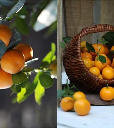 Jam making | Kumquat Marmalade … In Season & in plenty!