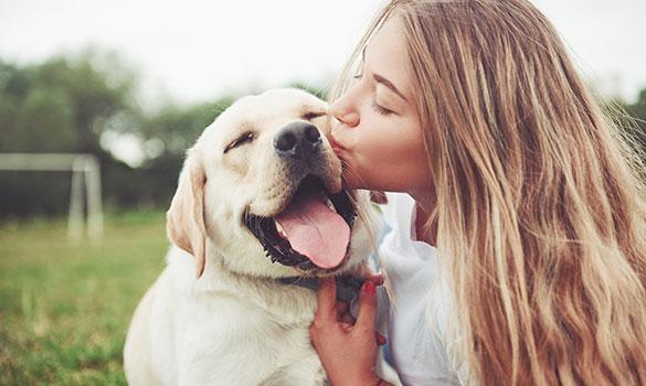 passionately pets