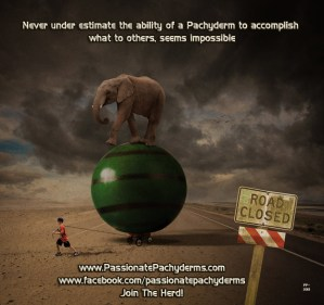 Never under estimate the ability of a Pachyderm to get the job done1