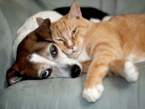Progetto Pet Therapy