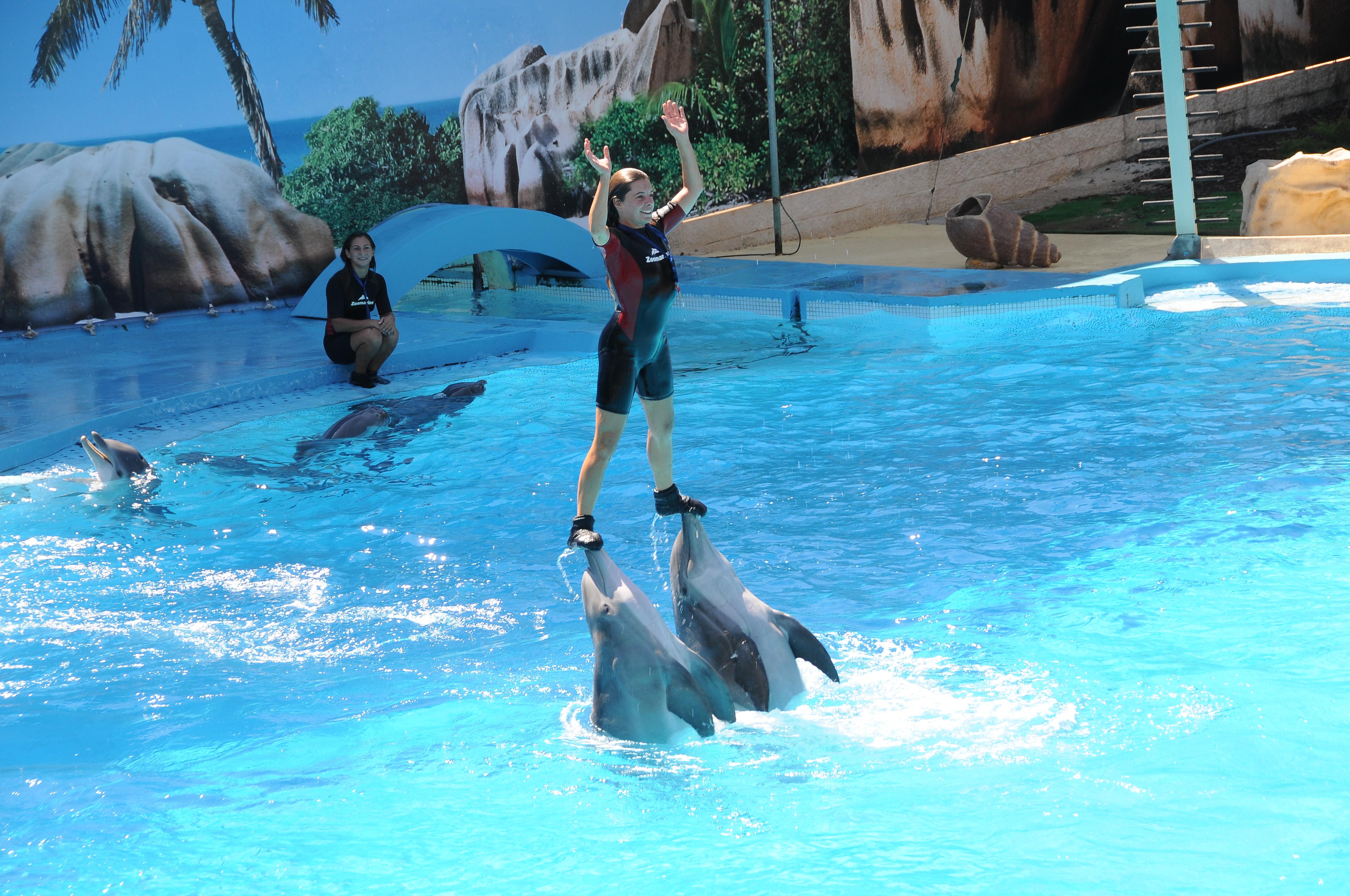 Zoomarine-Delfini-Spettacolo
