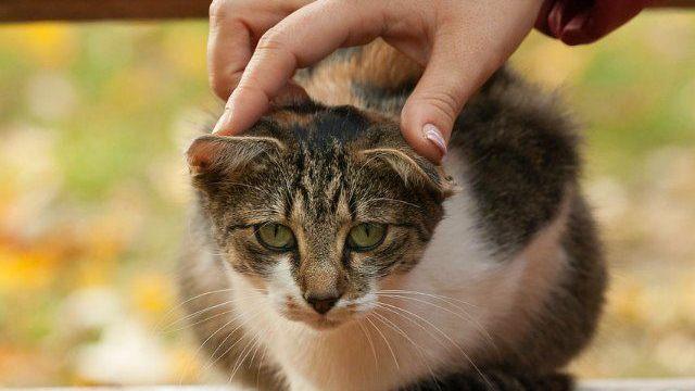 foto_gatto