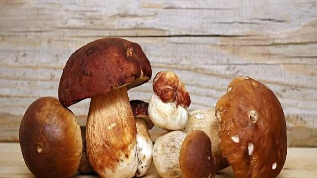 funghi ai bambini