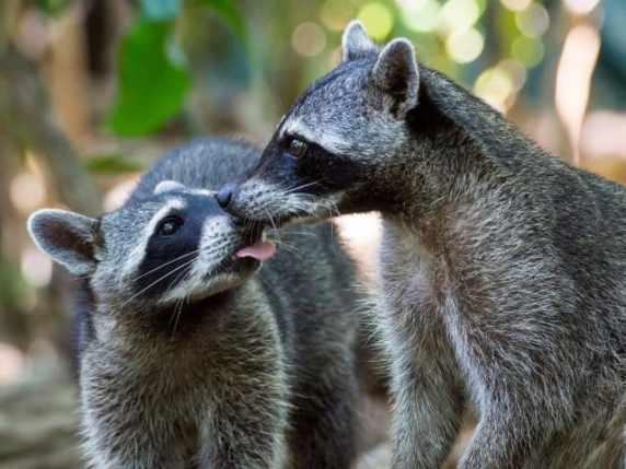 Immagini Tenere Le Foto Più Belle Di Animali Di Bambini E