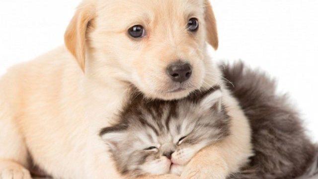 foto cane e gatto tenera