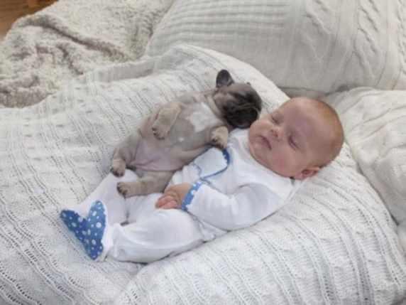 foto neonato e cane