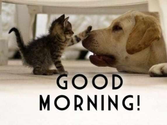 foto immagini spiritose buongiorno cane gatto