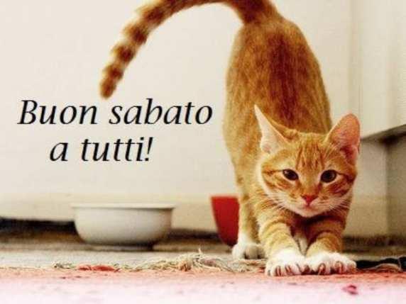 foto buongiorno amici sabato gatto