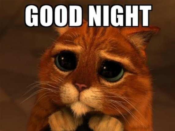 foto immagini buonanotte gatto