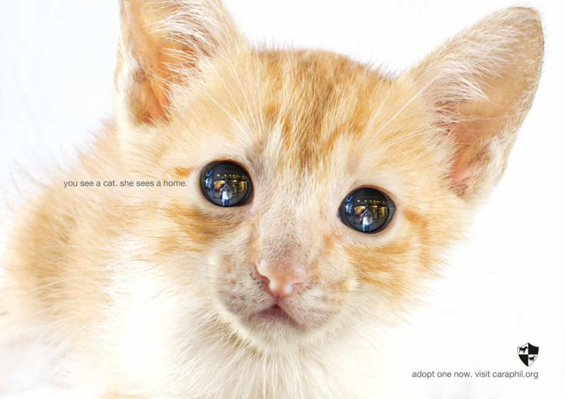 public-social-ads-animals-106[1]