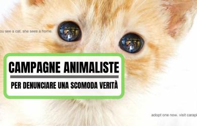 Campagne Animaliste di denuncia (1)