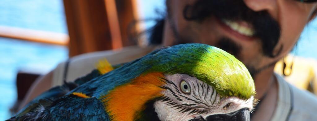come allevare pulli di pappagallo
