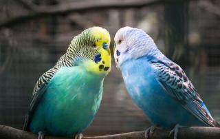 curiosità sui pappagalli