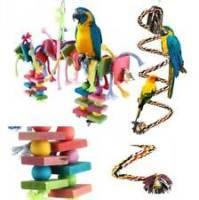 giochi pappagalli