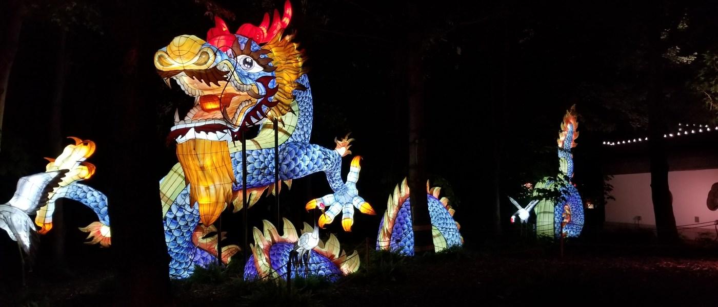 Jardin Botanique / Jardins de lumière 2