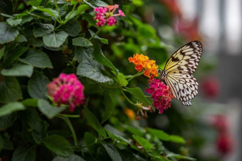 Papillons-en-liberte-a-montreal-2