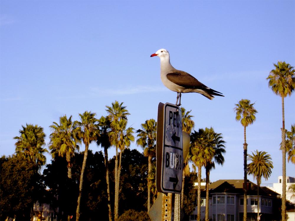 sea-gull-lede