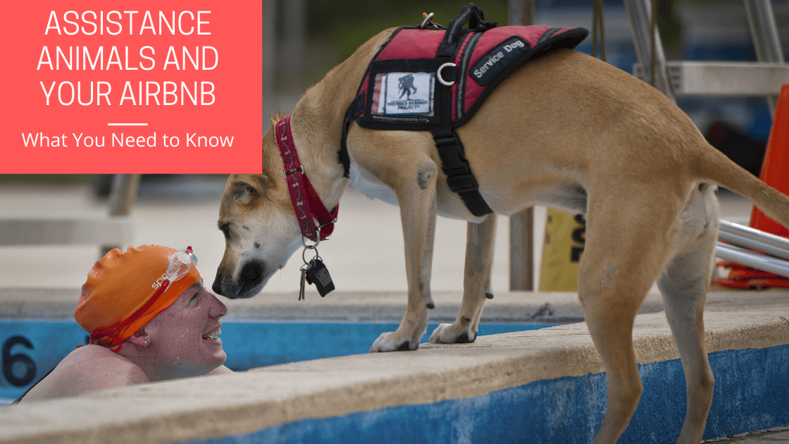 Assistance Animals and Your Airbnb
