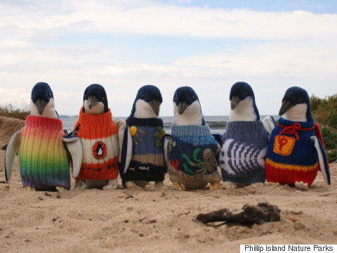 PENGUINS-IN-TINY-SWEATERS
