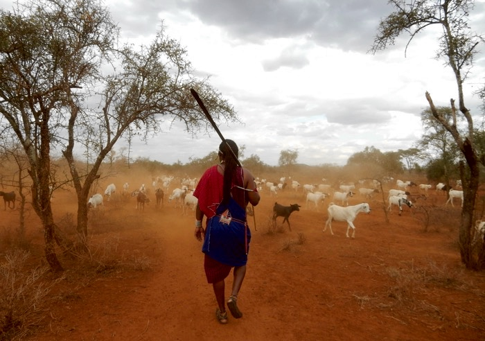 maasai-simba-camp-kenya