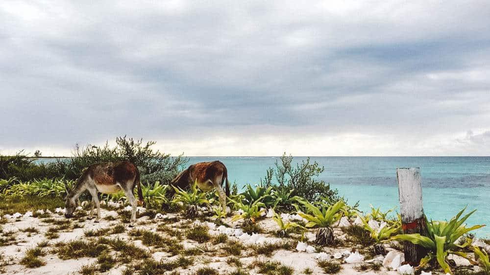 Cow Wreck Beach, Anegada