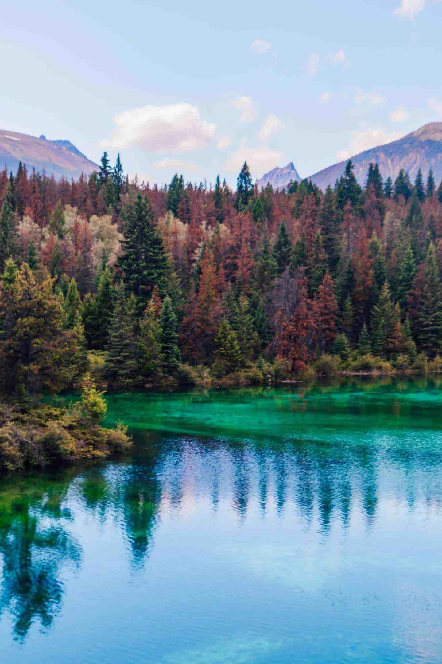 pine trees and alpine lakes
