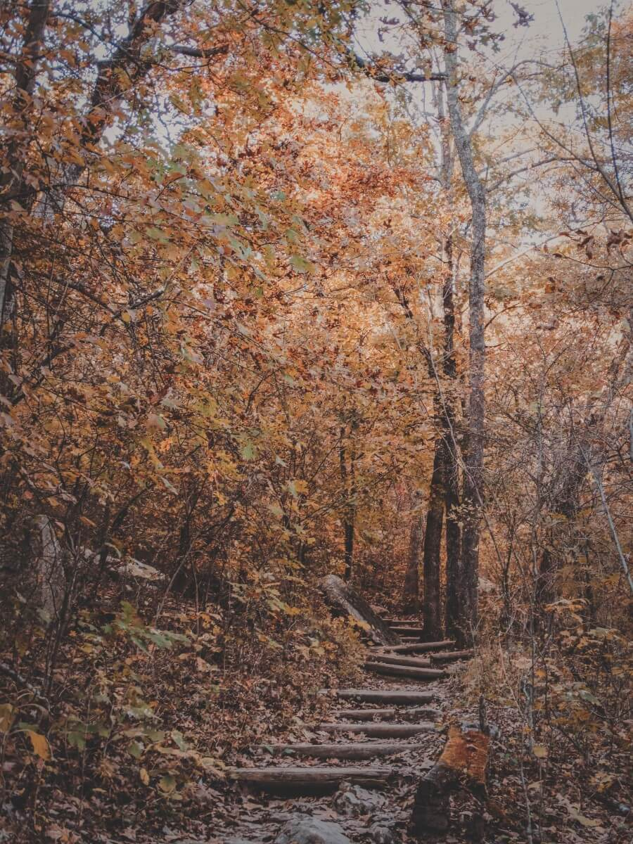 Tall wooded trees in fall in Oklahoma