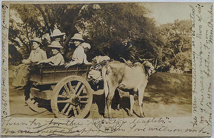Vintage Postcard British Colonial Family In Bullock Cart 1900