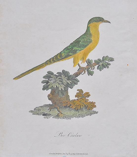 Bee Cuckoo or European Bee Eater 1790 Copperplate Engraving