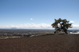 impossible tree atop the inferno cone in Craters of the moon National Monument and Preserve