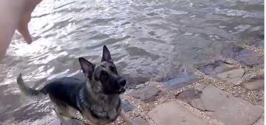 pastor atras do pau no rio