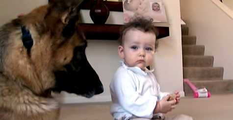 bebe rouba guloseima do pastor alemao