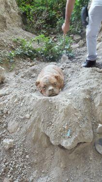 cadela-enterrada-2