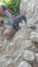 cadela-enterrada-3