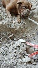 cadela-enterrada-4
