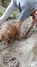 cadela-enterrada-5