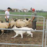 Stage Sheepdo 30 Settembre 2012