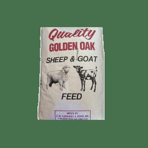 Golden Oak Sheep & Goat 20