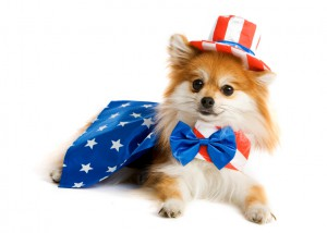 july 4 pet safety