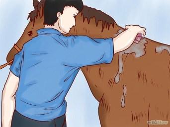heat stress with horses