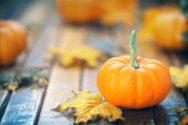 October garden tips