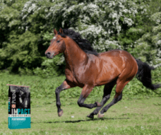Purina Professional Equine Feed