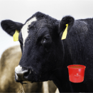 Winter Cattle Supplements