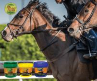 Horse poultice