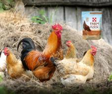 Purina Farm to Flock Hen Treats at Pasturas Los Alazanes.