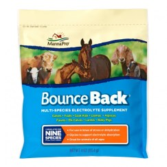 Bounce Back Electrolyte Supplement available at Pasturas Los Alazanes in Dallas, Texas.