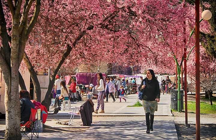 Feria de El Bolsón en primavera